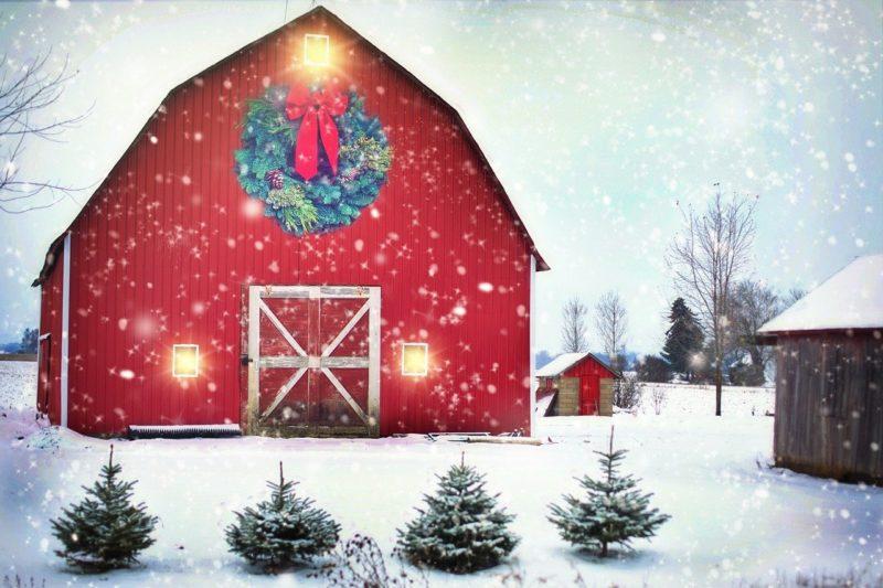 Winterstimmung am Bauernhof – der etwas andere Urlaub in Tirol