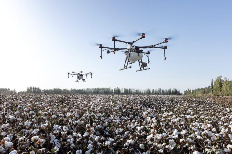 Natur zum Anziehen – bei Kaufland gibt es nur noch Bio-Baumwolle