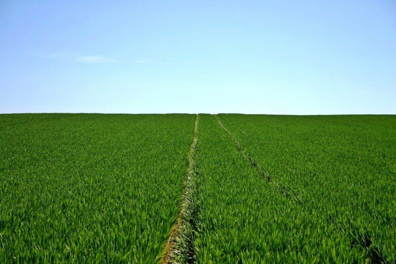 Punkte statt Pestizide