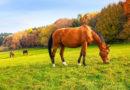 Alle Pferde – Alle Würmer Jetzt ist es Zeit für die wichtige Herbst-Entwurmung