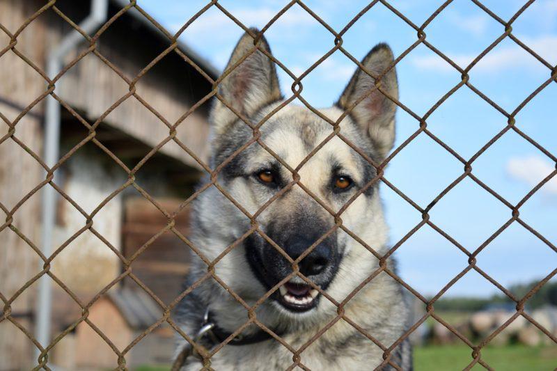 Hunde, Schafe und Kleintiere gefangen inmitten von Kot und Urin: PETA deckt Tierqualzucht in Bleicherode auf und fordert Beschlagnahmung der Tiere