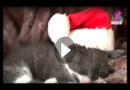 Weihnachten & Haustier: Das sind die besten Katzengeschenke