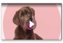 """Manipulieren Hunde uns etwa wirklich mit ihrem """"Dackelblick""""?"""