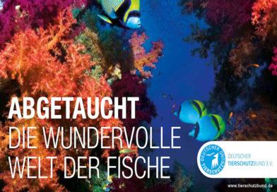 DU UND DAS TIER 4/2019 zeigt die Welt der Fische