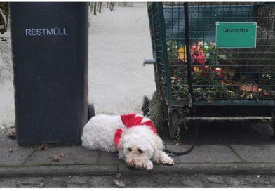 Tierheime stoppen Vermittlung:  Tiere gehören nicht unter den Weihnachtsbaum