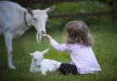 Tierschutzlehrer-Weiterbildung mit neuem Konzept in 2020