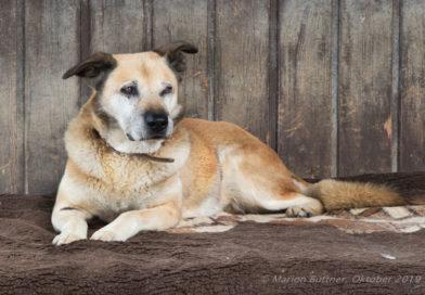 """Deutscher Tierschutzbund kürt Tierheimtier des Monats: Hundesenior """"Luis"""" sucht liebevolles Zuhause"""