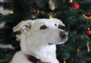 Advent mit Tier – Gefahrenquellen vermeiden und gemeinsame Zeit genießen