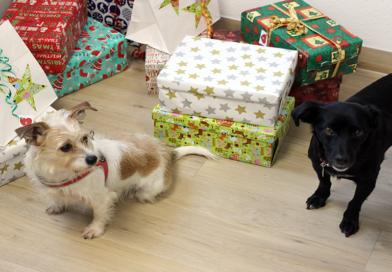 Die zehn besten Weihnachtsgeschenke für Hunde