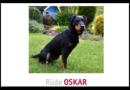 Deutscher Jagdterrier Oskar in Morschen weggelaufen