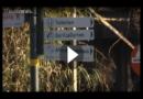 3 Frauen aus Krefeld für Tod von über 30 Affen verantwortlich