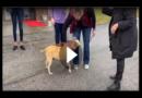 Neues Zuhause: Hund nach 6 Jahren im Tierheim endlich adoptiert