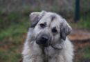 Tierheimtier des Monats – Bella