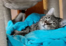 Besser zum Tierarzt gehen  – Falsch verabreichte Medikamente können krank machen