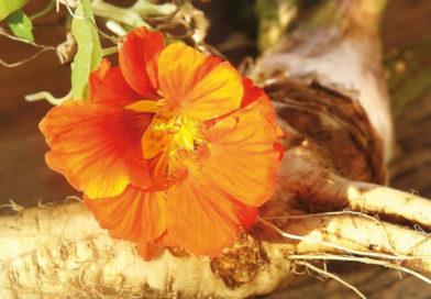 Aktuelle Studie zeigt: Wer pflanzliche Erkältungsmittel einnimmt, braucht weniger Antibiotika