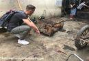 """""""Wie ein Gang durch die Hölle…"""" – Indonesien: Hunde und Katzen grausam erschlagen und anschließend verbrannt"""