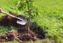 Bad Zwesten – Gemeinde Bad Zwesten pflanzt 250 Bäume