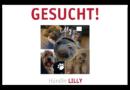 Die knuffige Mischlingshündin Lilly ist in Kassel weggelaufen