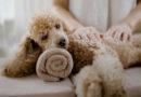 Du willst dein Haustier verwöhnen? Hier sind 11 Ideen!