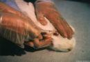 EU-Versuchstierzahlen: Eine Million Tiere leiden unter höchstem Schmerzensgrad