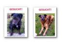 Bitte teilen: Zwei Hunde in Frankenau entlaufen