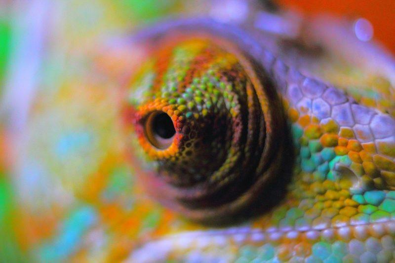 Gestatten: Das meistgeschmuggelte Säugetier der Erde