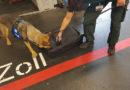 """Hauptzollamt Frankfurt am Main stellt 2,7 Kilogramm Kokainpaste sicher Rauschgiftspürhund """"Rambo"""" stellt seine Spürnase unter Beweis"""