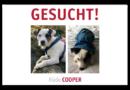 Terrier Rüde Cooper in Göttingen entlaufen