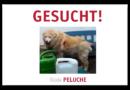Pyrenänenberghund in Witzenhausen vermisst