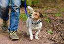 Corona Ausgangssperre: Darf ich mit meinem Hund Gassi? de