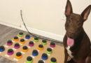 Dank Soundboard: Dieser Hund spricht mit seinem Frauchen
