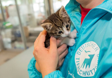 Deutscher Tierschutzpreis 2020: Bewerbungsphase startet