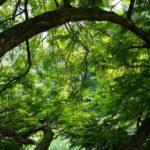Urwälder zum Anfassen