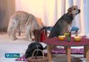 Tierische Theaterstars im Selbitzer Hundsdeooder