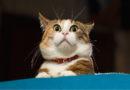 Unglaublicher Fang: Katze bringt lebende Ente heim