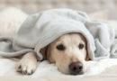 Coronavirus: Menschen sorgen sich auch um ihre Haustiere