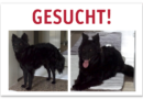 Schwarze Mischlingshündin PIZZELE  in Kassel vermisst