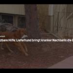 Unschätzbare Hilfe: Lieferhund bringt kranker Nachbarin die Einkäufe