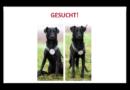 Mischlingshund in Neuenthal weggelaufen