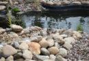 NABU: Amsel, Drossel, Fink und Star – die Stunde der Gartenvögel ist wieder da
