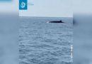 Wale genießen die Ruhe vor der Küste von Marseille