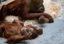 Finanzielle Lage der Zoos spitzt sich weiter zu Dringender Appell für Finanzhilfen auf Bundes- und Landesebene