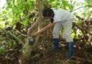 EDEKA und WWF: Gelb und gut – Auf dem Weg zur besseren Banane