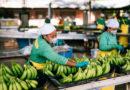 Verbraucher geben 2 Milliarden für Fairtrade-Produkte aus