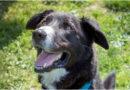 Tierheimtier des Monats – Karabas sucht liebevolles Zuhause