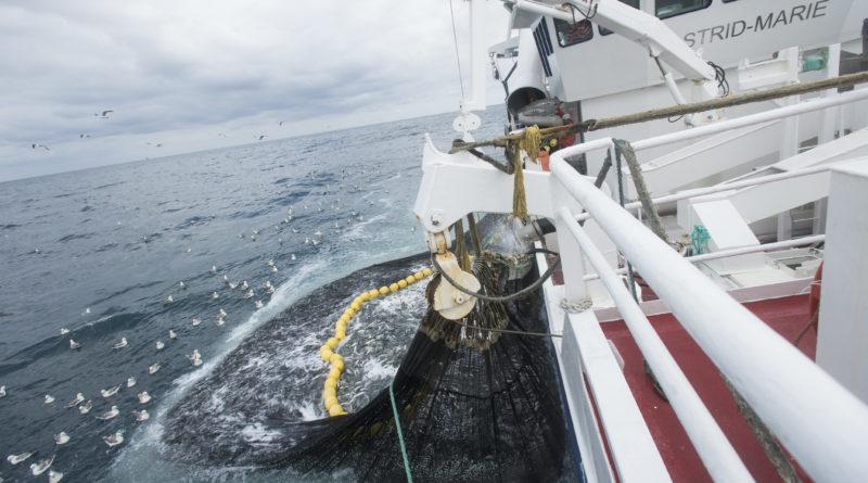Steuergelder für leere Meere?