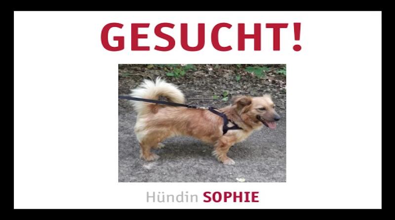Hündin Sophie in Guxhagen entlaufen
