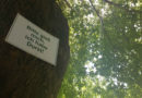 Hitzestress für Bäume: Zehn Eimer Wasser pro Woche als Patengeschenk