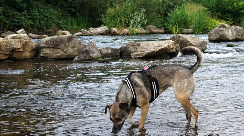 Hund, Katze, Kaninchen – alle brauchen Schutz vor zu viel Hitze