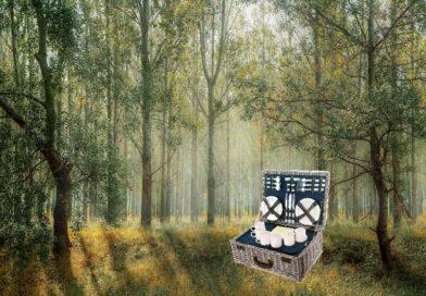 Wie wärs mal wieder mit einem Picknick?